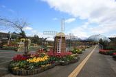 日本關西賞櫻深度之旅-鳥取花迴廊42-8:A81Q1631.JPG