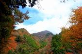 日本四國人文藝術+楓紅深度之旅-別府峽楓葉散策53-23:A81Q0036.JPG