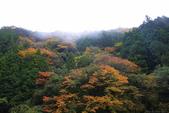 日本四國人文藝術+楓紅深度之旅-別府峽楓葉散策53-23:A81Q0014.JPG