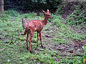 15-5-峇里島-Safari Marine Park野生動物園:IMG_6547峇里島-Safari Marine Park野生動物園.jpg