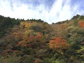 日本四國人文藝術+楓紅深度之旅-別府峽楓葉散策53-23:IMG_5421.JPG