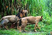 15-5-峇里島-Safari Marine Park野生動物園:IMG_1223峇里島-Safari Marine Park野生動物園.jpg