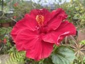 我家花園的花卉:20200311_132005-uid-215D9EF3-016F-4054-AACA-4AD28B5AAD04.jpeg