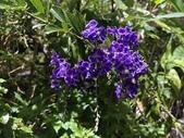 我家花園的花卉:20200311_180815-uid-00730904-458E-4C8B-B94D-0ECFC7DA4F1B.jpeg