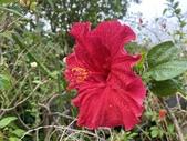 我家花園的花卉:20200312_143025-uid-496724D0-C4EB-4FA6-B622-365A0DC2E790.jpeg