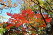 日本四國人文藝術+楓紅深度之旅-小豆島橄欖公園53-36:A81Q0326.JPG