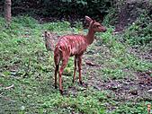 15-5-峇里島-Safari Marine Park野生動物園:IMG_6548峇里島-Safari Marine Park野生動物園.jpg
