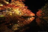 日本北關東東北行-8弘前城-櫻花紅葉園區驚豔楓紅.....:A81Q0691.JPG