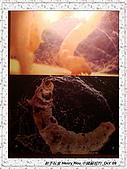 8.中國蘇州_其他掠影:DSC01911蘇州_參觀蠶絲被工場.jpg