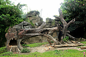 15-5-峇里島-Safari Marine Park野生動物園:IMG_1106峇里島-Safari Marine Park野生動物園.jpg