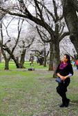 日本12天賞紫藤....VIP團之旅34-17 百年老欉櫻花在牧場內飄飄櫻吹雪...:A81Q6823.JPG