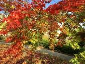 日本四國人文藝術+楓紅深度之旅-小豆島橄欖公園53-36:IMG_6867.JPG
