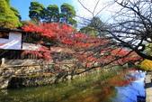 日本四國人文藝術+楓紅深度之旅-倉敷城美觀地散策53-45:A81Q0522.JPG