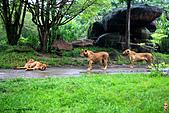 15-5-峇里島-Safari Marine Park野生動物園:IMG_1251峇里島-Safari Marine Park野生動物園.jpg