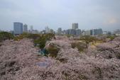 日本九州春櫻尊爵全覽之旅-1_福岡市舞鶴公園-綻放春櫻:A81Q5708.JPG