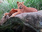 15-5-峇里島-Safari Marine Park野生動物園:IMG_6551峇里島-Safari Marine Park野生動物園.jpg