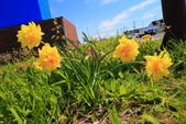 日本北海道美景+美食樂悠遊優質行程系列62-59_油菜花盛開在北海道滝川農場: