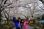 日本九州春櫻尊爵全覽之旅-1_福岡市舞鶴公園-綻放春櫻:A81Q5725.JPG