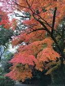日本四國人文藝術+楓紅深度之旅-金刀比羅宮楓紅盛開秘境 53-33:IMG_6381.JPG