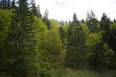 羅馬尼亞_布拉索夫_布朗城堡-吸血鬼的故鄉 :_MG_0174羅馬尼亞_往希奈亞帕麗斯城堡途中景緻.jpg