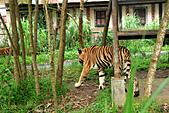 15-5-峇里島-Safari Marine Park野生動物園:IMG_1109峇里島-Safari Marine Park野生動物園.jpg