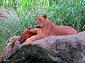 15-5-峇里島-Safari Marine Park野生動物園:IMG_6552峇里島-Safari Marine Park野生動物園.jpg