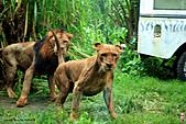 15-5-峇里島-Safari Marine Park野生動物園:IMG_1226峇里島-Safari Marine Park野生動物園.jpg