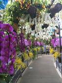 日本關西賞櫻深度之旅-鳥取花迴廊42-8:IMG_2375.JPG