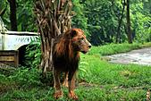 15-5-峇里島-Safari Marine Park野生動物園:IMG_1253峇里島-Safari Marine Park野生動物園.jpg