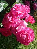 塞爾維亞SERBIA_貝爾格勒BELGRADE采風:DSC01354塞爾維亞_貝爾格勒BELGRADE_花卉.jpg
