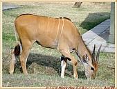 2.東非獵奇行-肯亞-馬賽馬拉動物保護區:DSC09031肯亞_馬賽馬拉動物保護區 MASAI MARA入口處.jpg