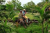 15-5-峇里島-Safari Marine Park野生動物園:IMG_1190峇里島-Safari Marine Park野生動物園.jpg