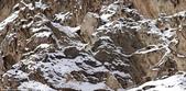自然界的偽裝技巧-你看到它們了嗎?:8-你能發現我嗎?雪豹獵物看起來在喜馬拉雅山.jpg