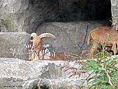 15-5-峇里島-Safari Marine Park野生動物園:IMG_6554峇里島-Safari Marine Park野生動物園.jpg