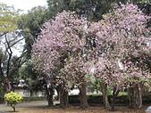 2015.0304春暖花開:20150304春暖花開 018.JPG