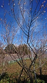 2018-1/16.17福壽山農場賞梅(經中橫合歡山,武嶺,天池)二日遊:DSC_0569.JPG