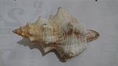 2018.7/26深海貝殼:DSC_1968.JPG