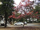 2015.0304春暖花開:20150304春暖花開 031.JPG