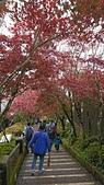 2018.10/13-15新北菁桐老街,十分瀑布,太平山棲蘭,鳩之澤三日遊:DSC_2984.JPG