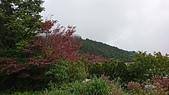 2018.10/13-15新北菁桐老街,十分瀑布,太平山棲蘭,鳩之澤三日遊:DSC_2969.JPG
