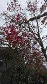 2018.10/13-15新北菁桐老街,十分瀑布,太平山棲蘭,鳩之澤三日遊:DSC_2971.JPG