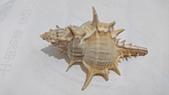 2018.7/26深海貝殼:DSC_1970.JPG