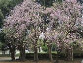2015.0304春暖花開:20150304春暖花開 020.JPG