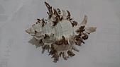 2018.7/26深海貝殼:DSC_1963.JPG