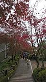 2018.10/13-15新北菁桐老街,十分瀑布,太平山棲蘭,鳩之澤三日遊:DSC_2970.JPG