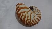2018.7/26深海貝殼:DSC_1967.JPG