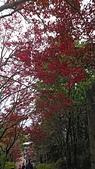 2018.10/13-15新北菁桐老街,十分瀑布,太平山棲蘭,鳩之澤三日遊:DSC_3004.JPG