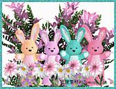 2011兔年大吉图片欣赏:1a03e4q117949.631a30.jpg