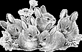 2011兔年大吉图片欣赏:1f0415q11a0b7.4d2150.jpg