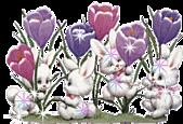 2011兔年大吉图片欣赏:1302d2dq118b35.efabd2.jpg